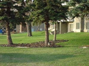 photo of garden at The Madison, Leduc, Alberta